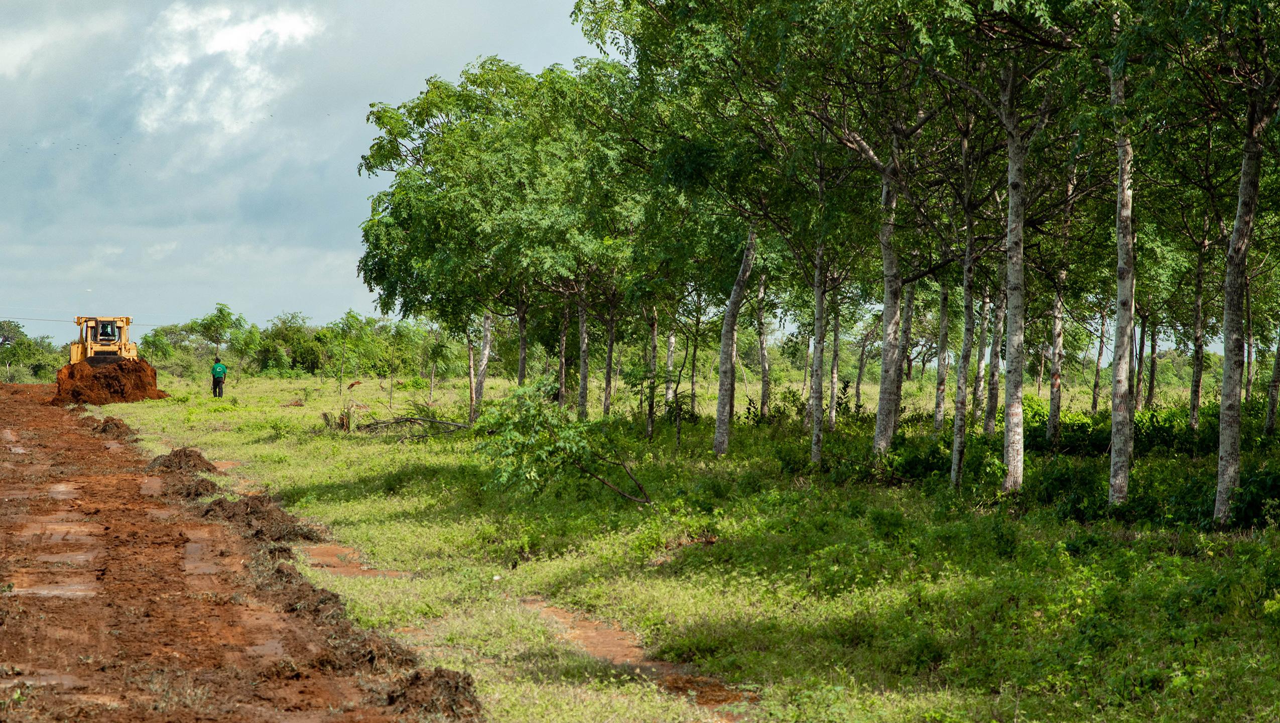 Trädplantering minskar klimathotet
